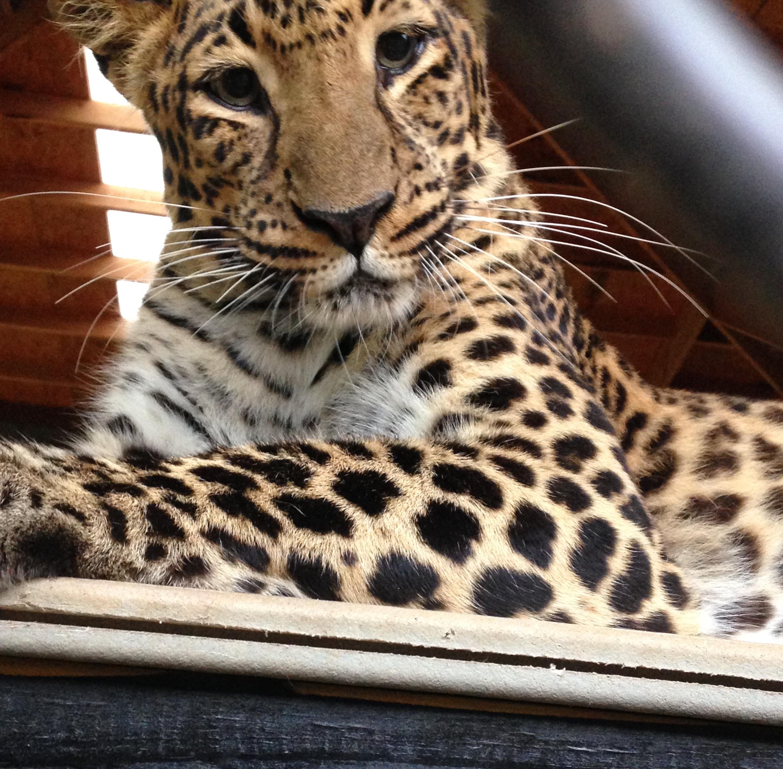 zoo animals 11