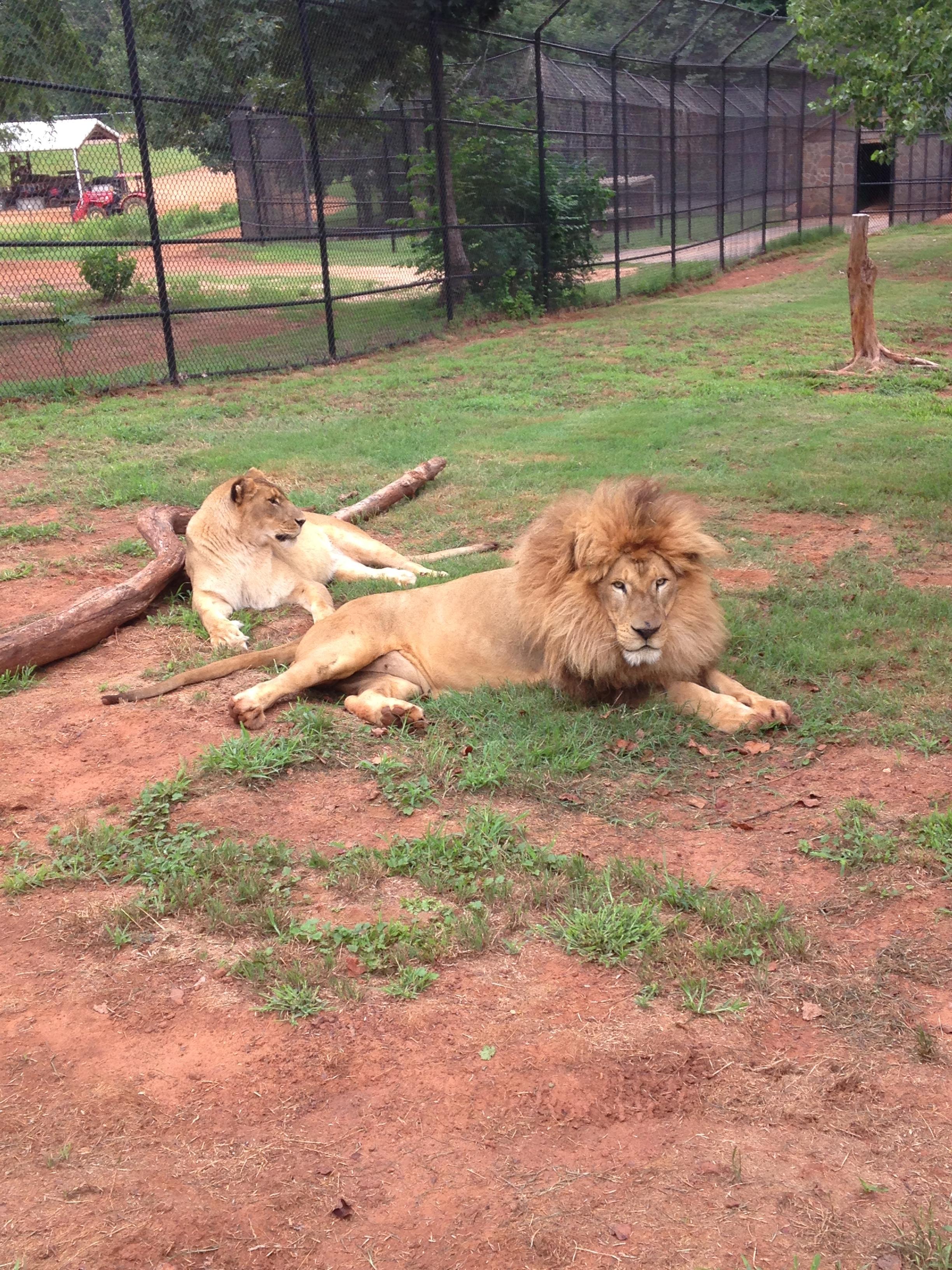 zoo animals 12