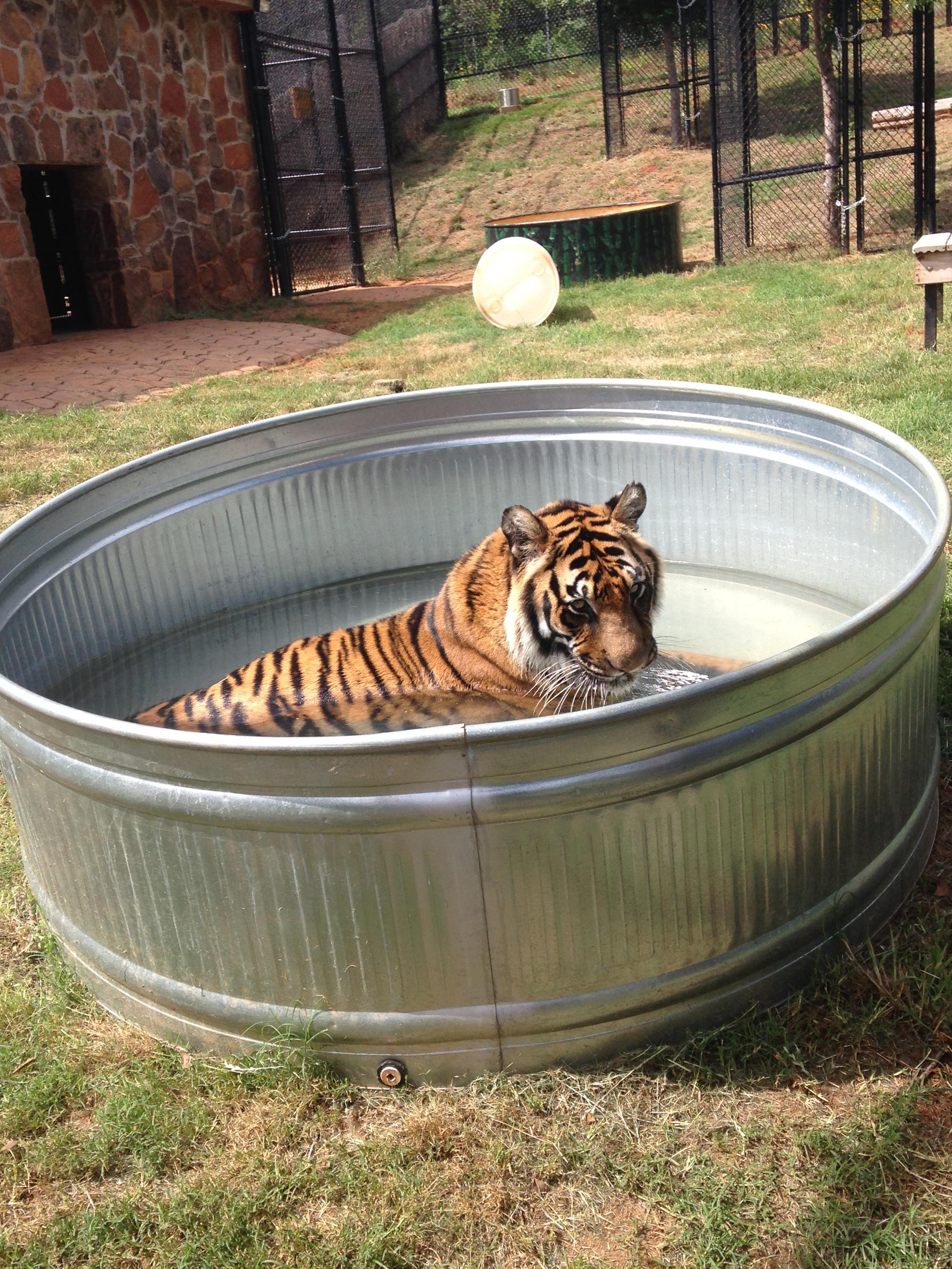 zoo animals 13