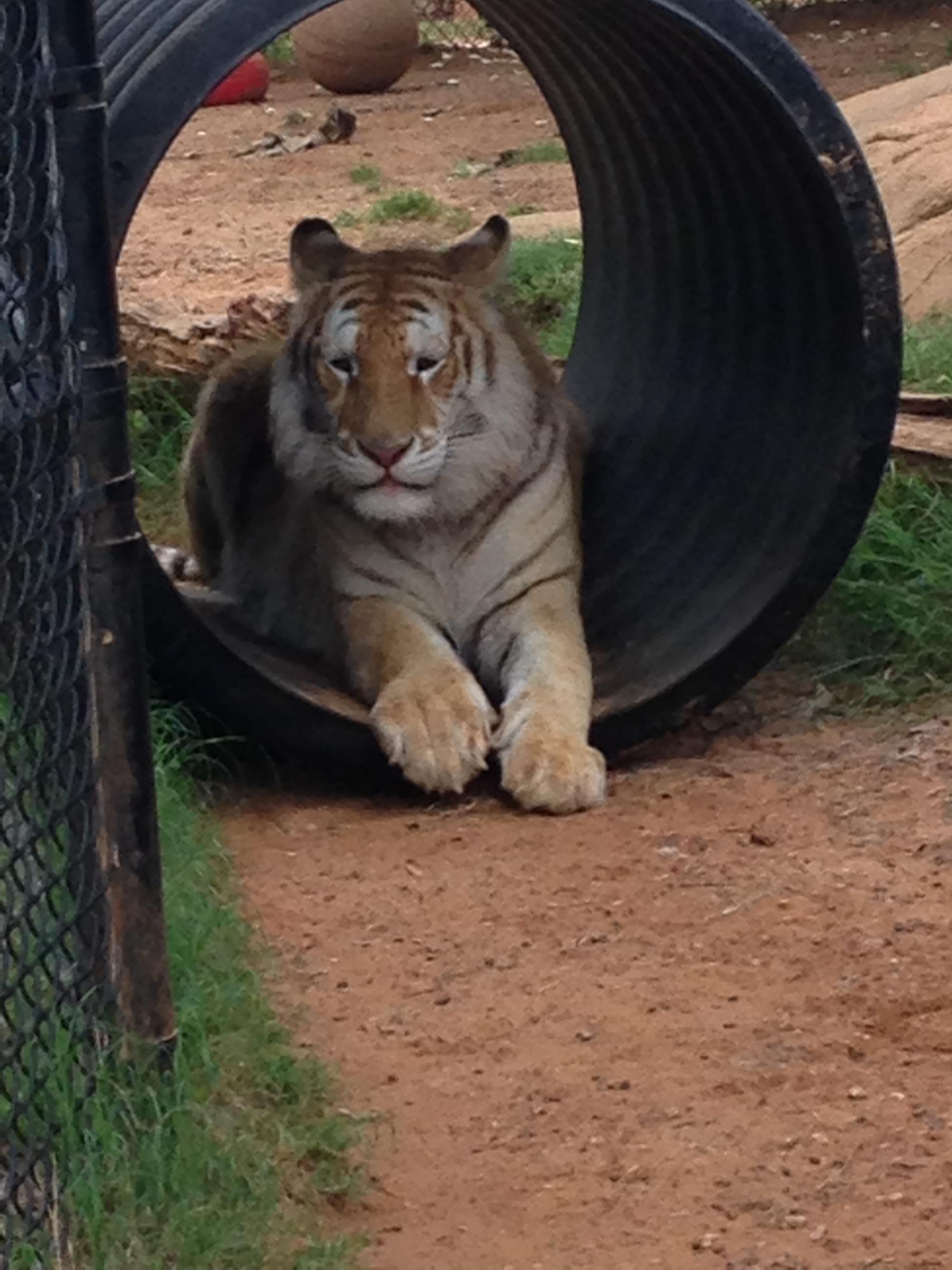 zoo animals 15