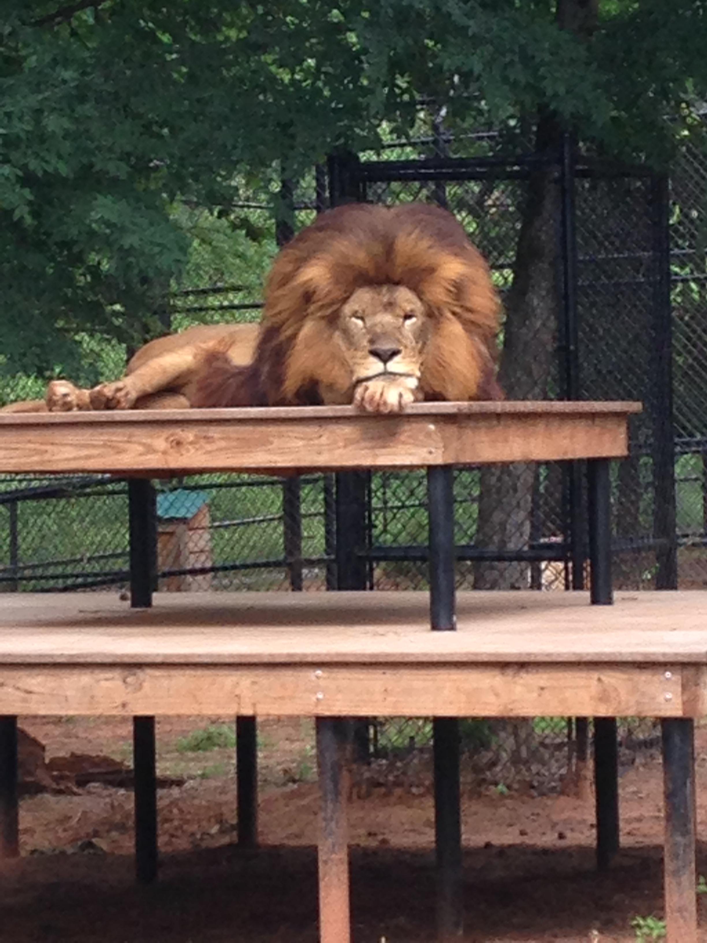 zoo animals 16