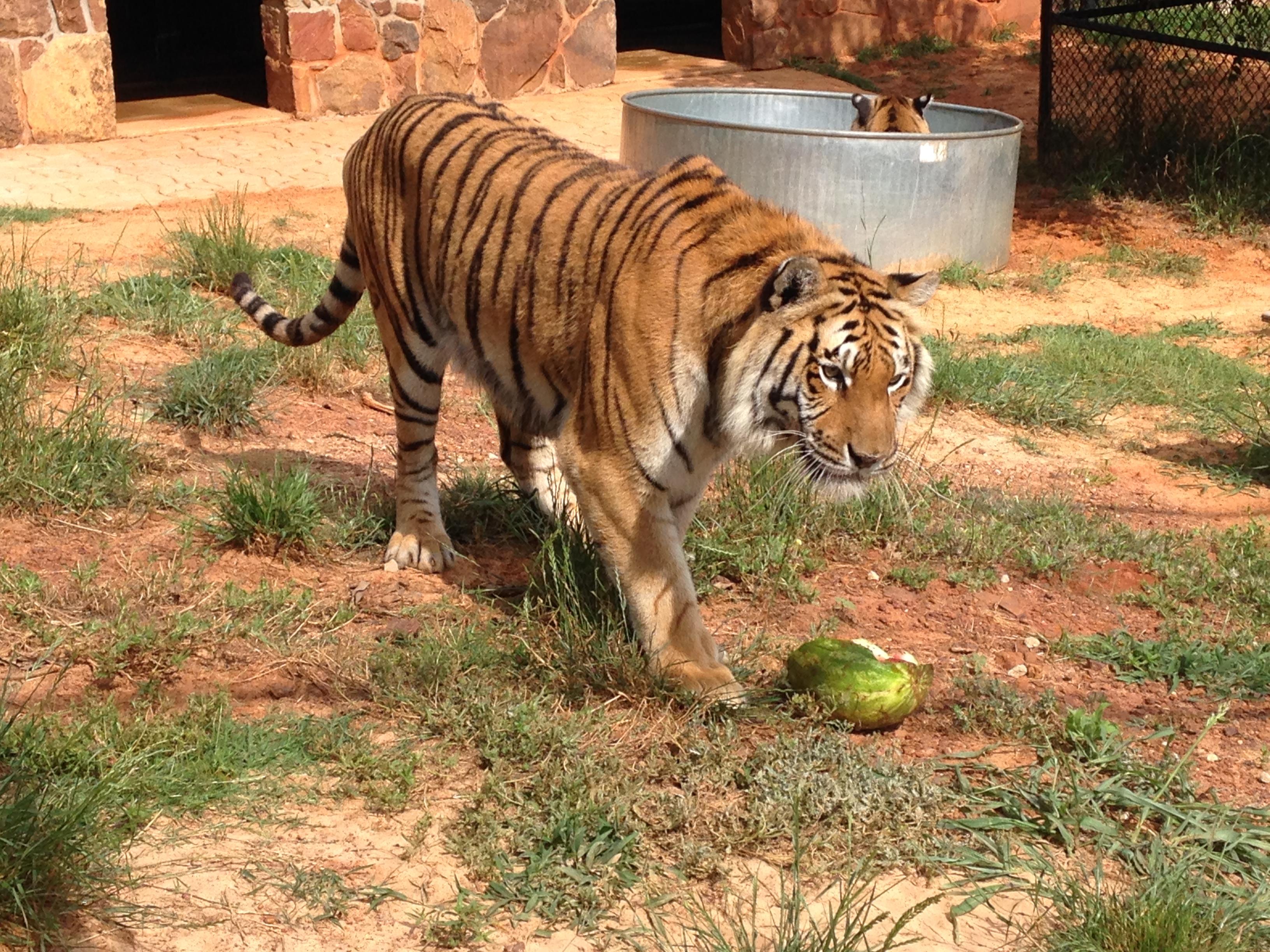 zoo animals 17