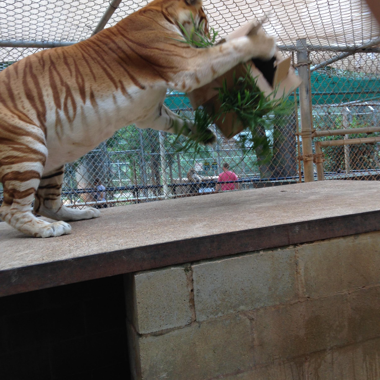 zoo animals 3