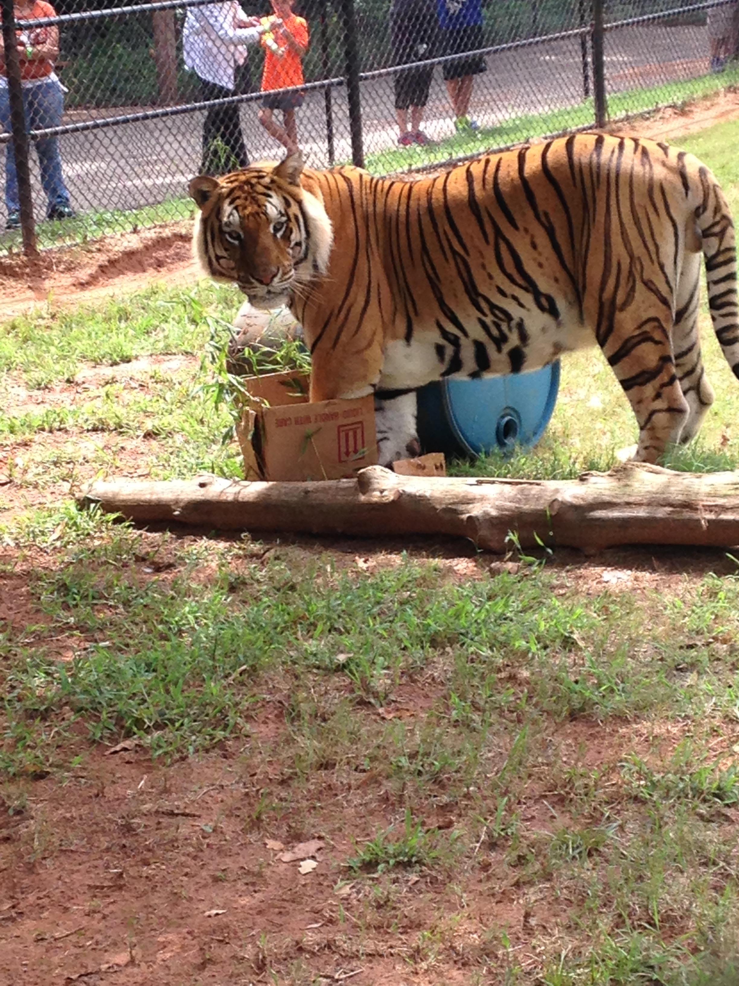 zoo animals 5