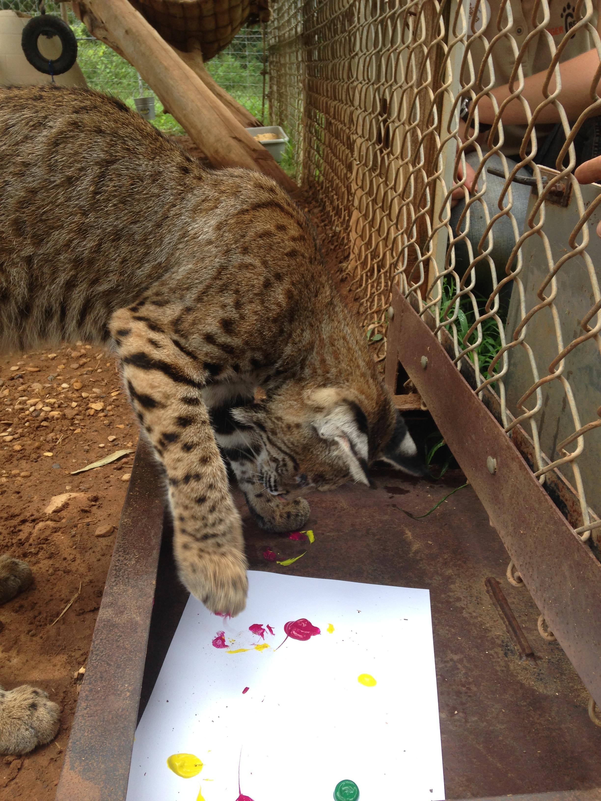 zoo animals 6