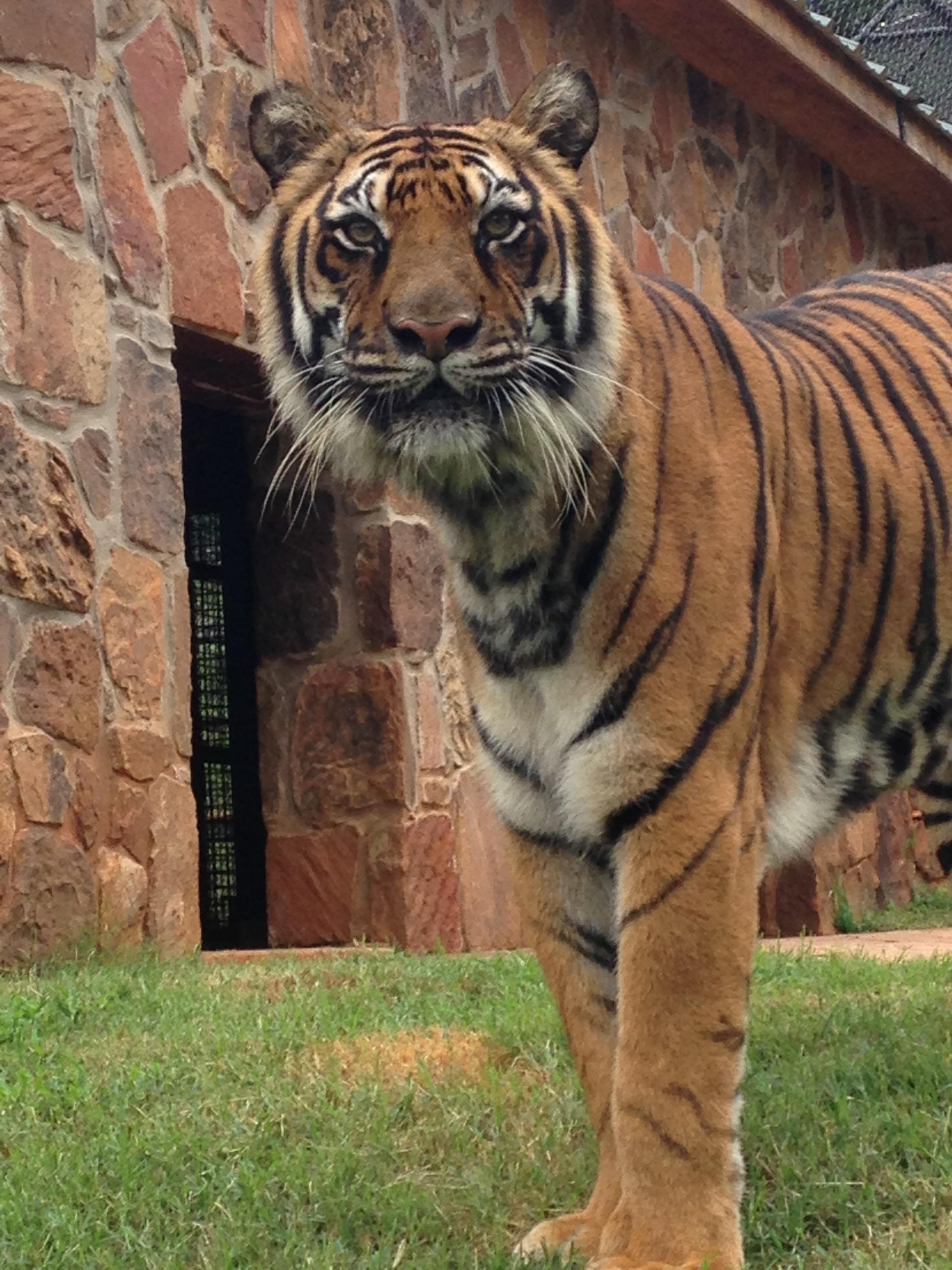 zoo animals 7