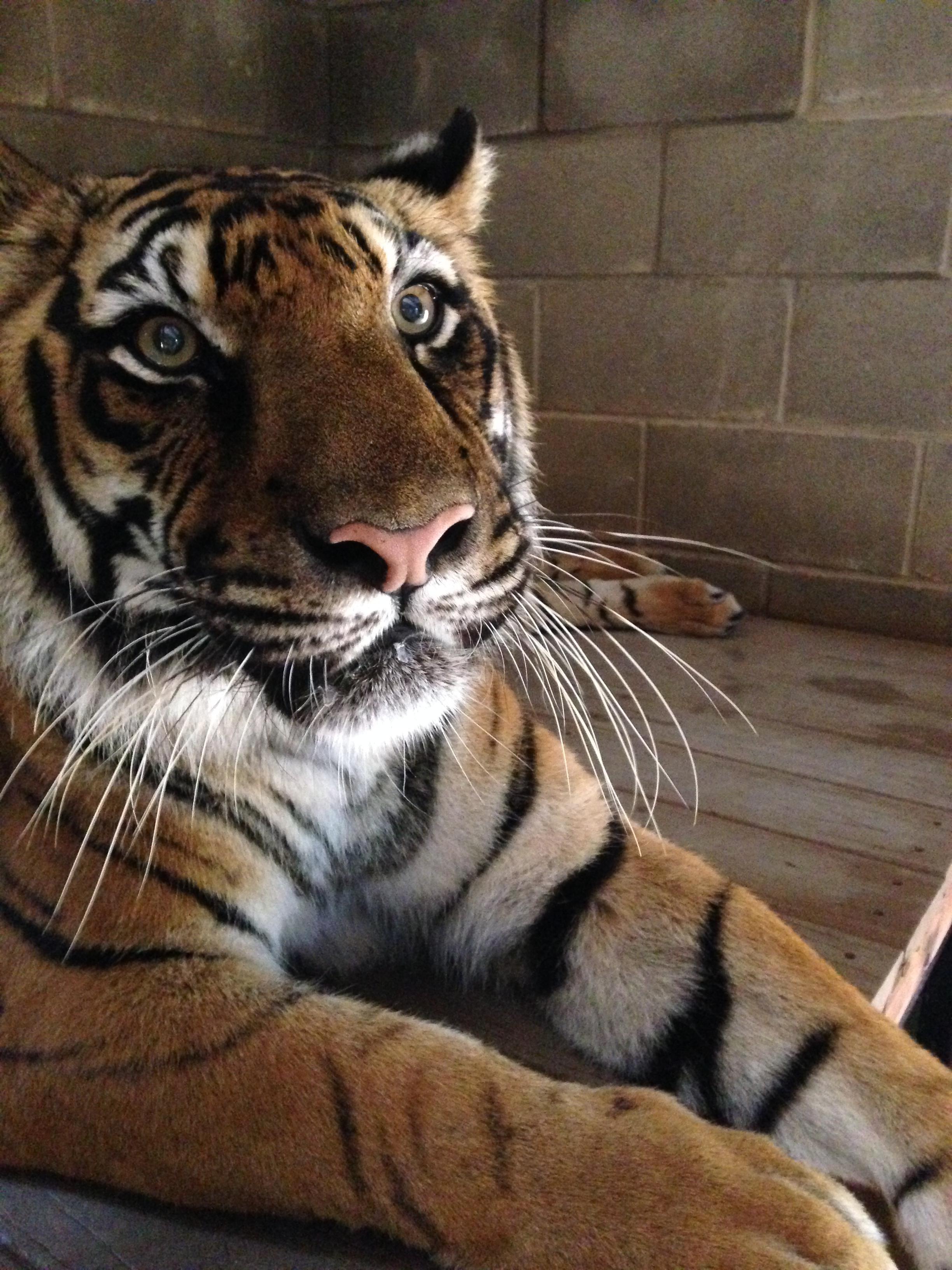 zoo animals 8